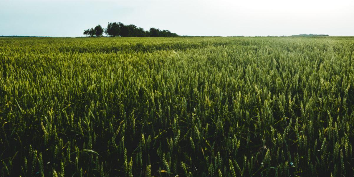 PHC goes green: o caminho da sustentabilidade passa por aqui